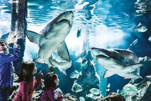 acquario di cattolica squali