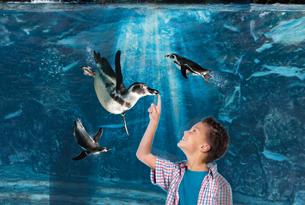 acquario di cattolica pinguini