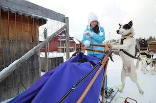 Alta-Norvegia-Finnmark-escursione-sleddog-husky4