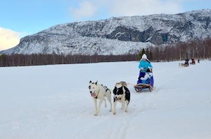 Alta-Norvegia-Finnmark-escursione-sleddog-husky8