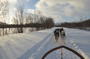 Alta-Norvegia-Finnmark-escursione-sleddog-husky9