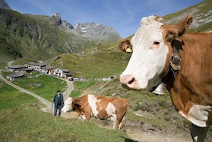 Austria-Tirolo-Orientale-TVB Osttirol-Alti-Tauri-ph-PatriceKunte_Teaser