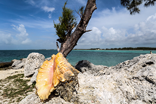 Bahamas-Photo-Devid-Rotasperti-Photographer (3)