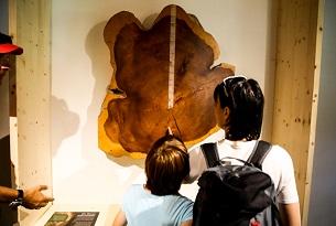 Carinzia-Il-Museo-del legno-Foto-Devid-Rotasperti (2)