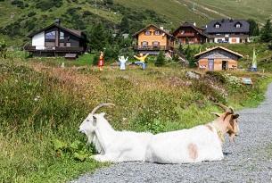 Carinzia-parco-tematico-Heidi-Alm-Foto-Devid-Rotasperti (5)