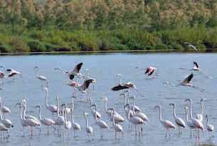 Cavallino-Treporti-laguna-fenicotteri 1