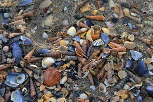 Conchiglie-spiaggia-camargue