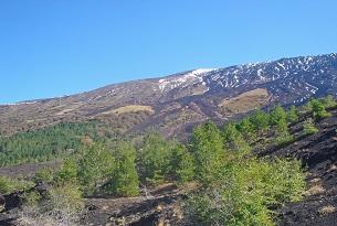 Il Vulcano Etna con i bambini, paesaggio vegetale in quota