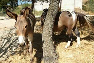 Fabriano-agriturismo-il-gelso-fattoria