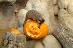 Halloween-Bioparco-Torino