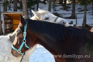 Katschberg-foto-familygo-cavalli