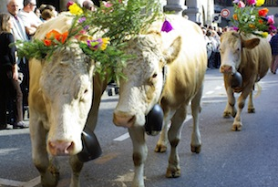 Transumanza feste: Annecy