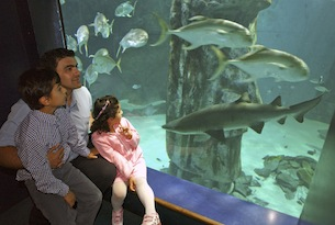 London-Aquarium