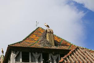 Mulhouse-ecomuseo-alsace-photo-devid-rotasperti(3)