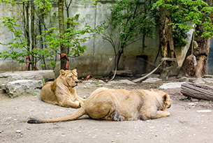Mulhouse-parco-zoologico-e-botanico-mulhouse-photo-devid-rotasperti(5)