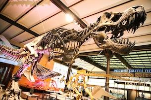 Museo-Scienze_Naturali_Bruxelles-Fotografia-Devid-Rotasperti-1