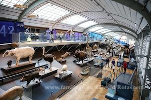 Museo-Scienze_Naturali_Bruxelles-Fotografia-Devid-Rotasperti-5