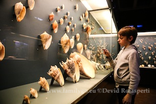 Museo-Scienze_Naturali_Bruxelles-Fotografia-Devid-Rotasperti-7