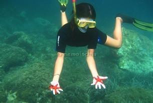 Nemo-ischia-snorkelling3