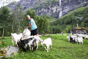 Norvegia-Melchiorgarden-Goat-Safari-Photo-by-Devid-Rotasperti-Photographer2