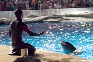 Oltremare laguna delfini