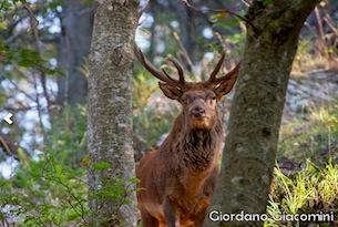 Parco-Foreste-Casentinesi-Autunno-slow-foto G. Giacomini-4