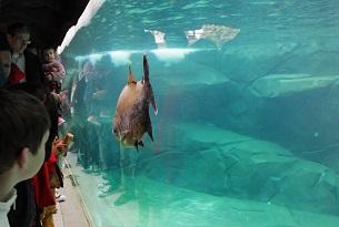 Zoo di Parigi, foto Manuel Cohen