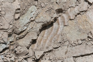 Piemonte-Valle-Maira-Resti-fossili-Fotografie-Devid-Rotasperti 2