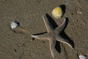 Pineta-Stella-marina