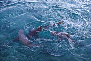 Squali-alle-Bahamas-Photo-Devid-Rotasperti-Photographer (1)