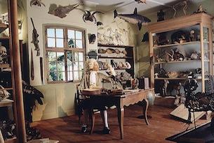 Strasburgo-Musee-Zoologique
