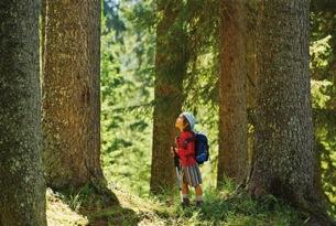 Bimbo tra gli abeti di risonanza della foresta di Paneveggio
