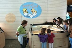 Valencia-per-bambini-familygo-museo-scienze