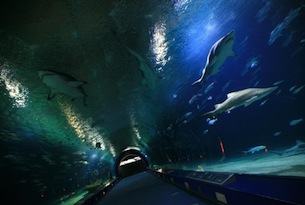 Valencia-per-bambini-visitvalencia-Tunnel-Oceanografic_foto Javier Jaja_493