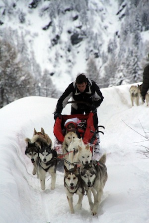 Valtellina-Arnoga-sleddog4