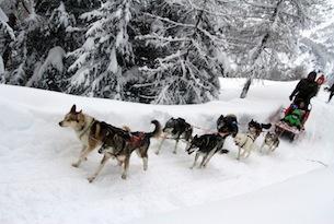 Valtellina-Arnoga-sleddog6