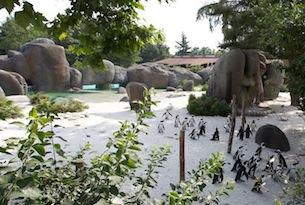 Zoom Torino_Baia Pinguini_habitat