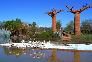 Zoom Torino_Madagascar_habitat