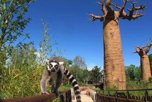 Zoom Torino_Madagscar_lemuri