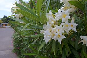 basilicata-mare-pisticci-masseria-fiori