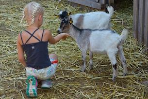 carinzia-nassfeld-pramollo-fattoria-gailtal4