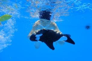 diving-castroboleto2