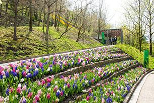 Giardini Merano per bambini, fioriture in primavera