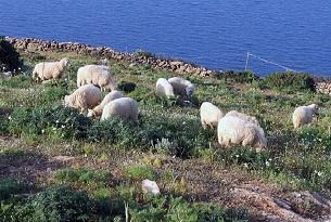 grecia-sifnos-tradizioni-32