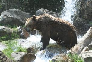 innsbruck orso zoo delle alpi
