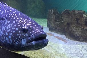 jesolo-aquarium1