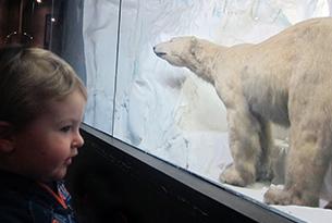 Museo di zoologia Roma bambini, orso polare