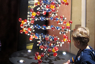 Museo di zoologia Roma bambini, DNA