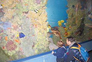 Museo di zoologia Roma bambini, barriera corallina