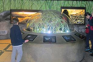 Museo di zoologia Roma bambini, insetti